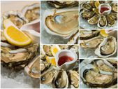 Collageof  platter of fresh organic raw oysters on ice — Stock Photo