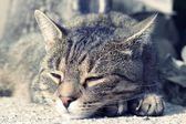 Cute cat sleeping — Stock Photo