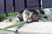 Curios striped cat playing — Foto Stock