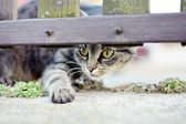 Curios striped cat playing — Stock Photo