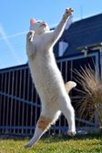 White playful cat playing and jumping in the garden — Stock Photo