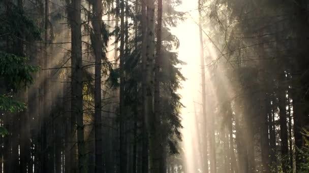 Los rayos del sol en los árboles — Vídeo de stock