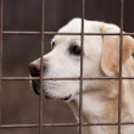 Lonely dog — Stock Photo