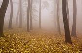 Mysterious Autumn — Foto de Stock