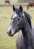 Horse portrait — Stockfoto