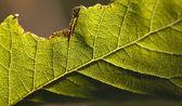 Chewed leaf macro — Stock Photo