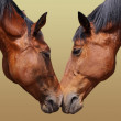 Horse love — Stock Photo