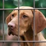 Homeless dog — Stock Photo