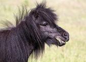 Pony horse portrait — Стоковое фото