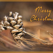 Stock Photo: Beautiful Christmas pine cone