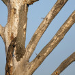 Stock Photo: Leafless tree detail
