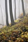 Floresta nublada de outono — Fotografia Stock