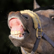 Stock Photo: Funny horse portrait