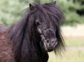 Pony horse — Stock Photo