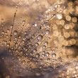 Beautiful water drops — Stock Photo