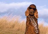 Perro gracioso — Foto de Stock