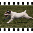 Funny running dog moments — Stock Photo #50114503