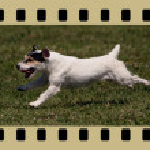 Постер, плакат: Running dog in filmstrips