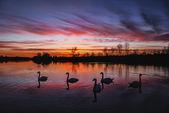 лебединое озеро — Стоковое фото