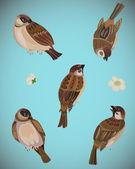 Vector set of sparrows — Stock Vector