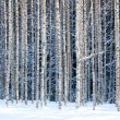 Snowy birches — Stock Photo #39585759