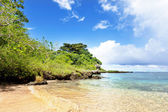 Tropical beach with trees in background — Stock Photo