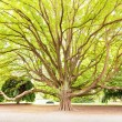 Stock Photo: Massive tree in park on sunny day
