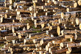 Woodpile in sunshine — Stock Photo