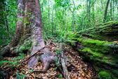 Lush foliage in rain forest — Stock Photo