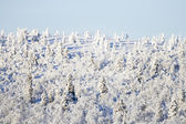 Snowy trees on a hillside — Stock Photo