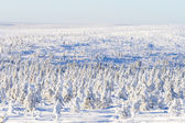Snowy forest in sunshine — Stock Photo