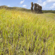 Stock Photo: Moais behind green grass in Easter Island
