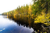 Autumn forest and a calm lake — Stock Photo