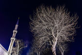Grey leafless tree and a minaret of Blue Mosque at night — Stock Photo