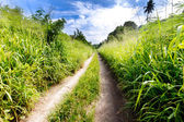 Small country road through lush foliage — Stock Photo