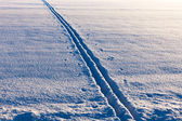Ski tracks in evening sun — Stock Photo