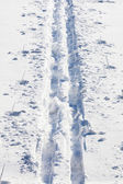 Cross country ski tracks — Stock Photo