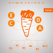 Vegetarian food. Vector infographic for content of vitamins and minerals in carrot. — Stock Vector
