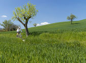 Cyclist on green countryside — Stock Photo
