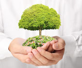 Holding green tree in hand — Stock Photo