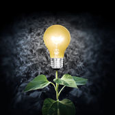 Light bulb with plant as the filament — Stock Photo