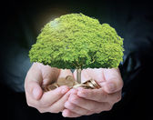 Holding tree sprouting from a handful of coins — Stok fotoğraf