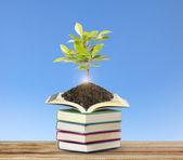 与植物的书 — 图库照片