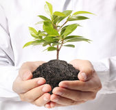 Holding green plant in hand — Stock Photo