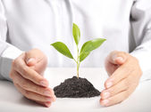 Green plant in hand — Stock Photo