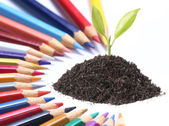Color pencil and plant — Stock Photo