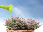 Water pouring watering flower — Stockfoto