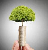 Affärsman hålla växten gro från handfull mynt — Stockfoto