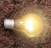 Energeticky úsporné žárovky — Stock fotografie
