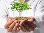 Invertir en negocios verdes — Stockfoto